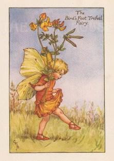 "Barker: Bird's Foot Trefoil Fairy. c1925. An original vintage chromolithograph. 3"" x 4"". [DECp1905]"
