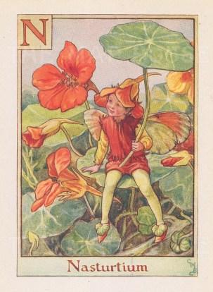 "Barker: Nasturtium Fairy. c1934. An original vintage chromolithograph. 3"" x 4"". [DECp1954]"