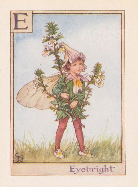 "Barker: Eyebright Fairy. c1934. An original vintage chromolithograph. 3"" x 4"". [DECp1962]"