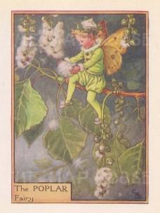"Barker: Poplar Tree Fairy. c1940. An original vintage chromolithograph. 3"" x 4"". [DECp2029]"