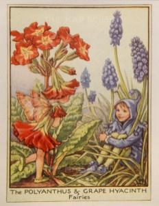 "Barker: Ployanthus and Grape Hyacinth Fairies. c1944. An original vintage chromolithograph. 3"" x 4"". [DECp2059]"