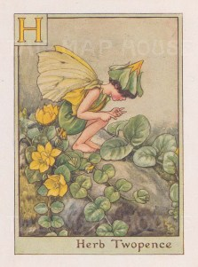 """Barker: Herb Twopence Fairy. c1939. An original vintage chromolithograph. 3"""" x 4"""". [DECp955]"""