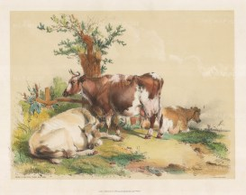 From a Sketch from Nature after the Edwardian artist known as Cow Cooper.