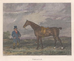 "Pittman: Treacle. 1826. A hand coloured original antique steel engraving. 6"" x 5"". [NATHISp6943]"