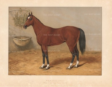 Owned by the Maharajah of Jodhpore and winner of numerous races in 1880-85. After a portrait presented to Tweedie from the Maharajah.