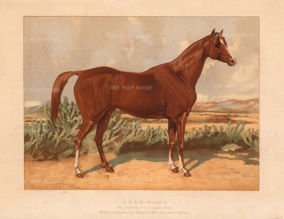 Winner at Mysore and owned by the Aga Sultan Muhammad Shah of Bombay. From a portrait presented to Tweedie by the Aga Khan.