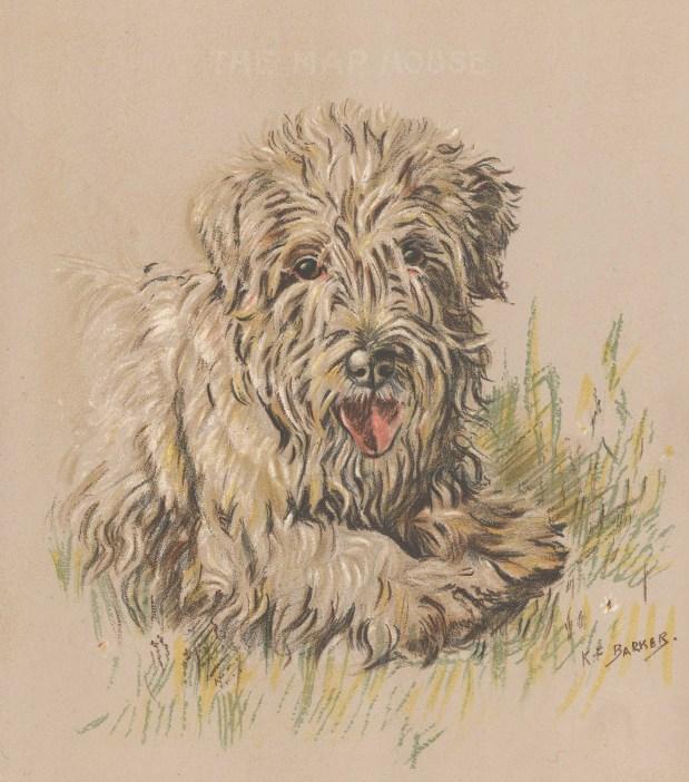 "Barker: Sealyham Terrier. 1938. An original vintage chromolithograph. 8"" x 11"". [NATHISp7182]"