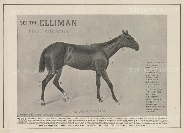"""Illustrated London News: Ellman's Guide to an unsound horse. 1902. An original black & white antique photo-lithograph. 14"""" x 7"""". [NATHISp7525]"""