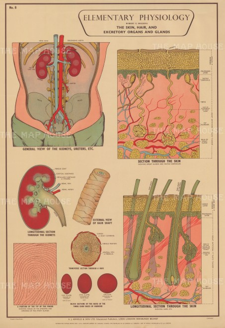 Elementary Physiology: Skin, Hair and Excretory Organs and Glands with details.
