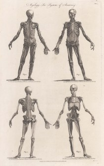 Four anterior and posterior figures showing the third and fourth muscle layers.