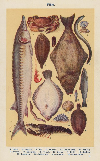 Fish: 16 species with key.