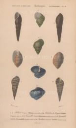 Five varieties of shells with keys.
