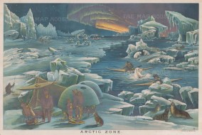Arctic Zone: Comparative chart showing the frigid mountainous environment, animals and inhabitants of polar regions.
