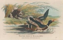 "Wheble: Gun dog. 1812. A hand coloured original antique etching. 7"" x 5"". [FIELDp1396]"