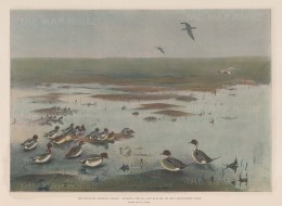 Wildfowl Shooting on the Lincolnshire coast. Widgeon, Pintail and Mallard.