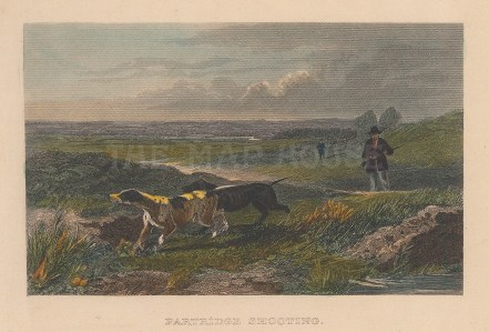 "Wood: Partridge Shooting. c1850. A hand coloured original antique steel engraving. 6"" x 4"". [FIELDp1470]"