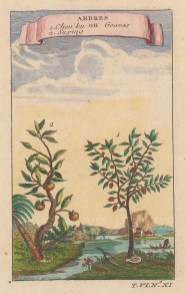 """Bellin: Goava and Lychee. 1759. A hand coloured original antique copper engraving. 3"""" x 5"""".[NATHISp6338]"""
