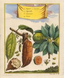 """Bellin: Cocoa & Naseberry. 1754. A hand coloured original antique copper engraving. 5"""" x 8"""". [NATHISp6984]"""