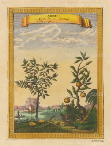 """Bellin: Goava and Lychee. 1748. A hand coloured original antique copper engraving. 6"""" x 8"""". [NATHISp7133]"""