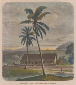 Cocunut Tree (Cocos nucifero). With a European House in Tahiti.
