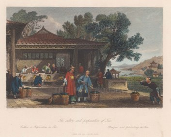 Tea culture and preparation in China.