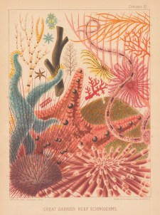 Great Barrier Reef Echinoderms: 13 Reef Corals and Echinodermata.