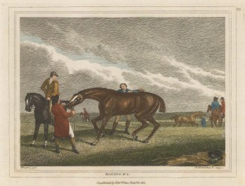 Plate 3. Devoted to field sports, Howitt was particularly known for the accuracy of his composition.