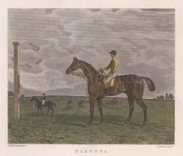 "Pittman: Mazeppa. 1832. A hand coloured original antique steel engraving. 6"" x 5"". [SPORTSp3471]"