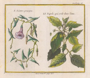 With Water Tupelo (Nyssa aquatica) branch.