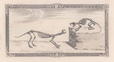 Animal Anatomy: Skeletons of a Weasel and Rat with a decorative border.