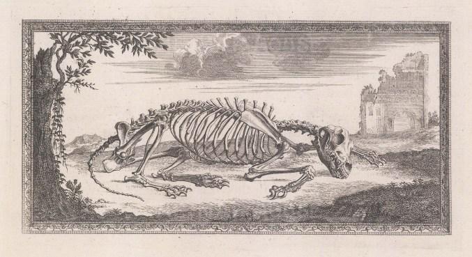 Animal Anatomy: Skeleton of sleeping Lion with ornate border.