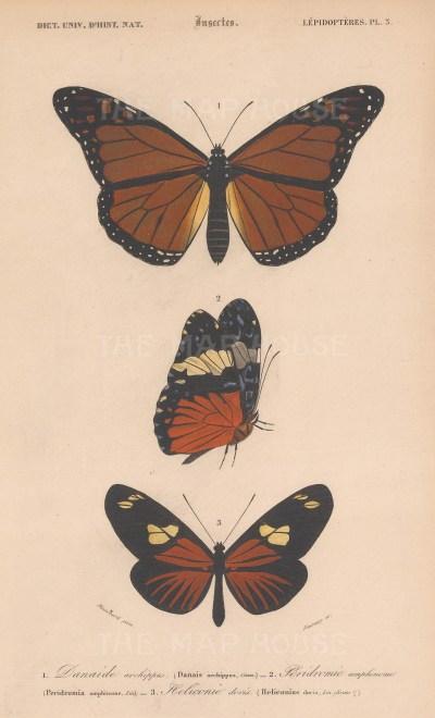 Butterflies: Monarch (Danais archippus), Red Cracker (Peridromia amphinome) and Longwing (Heliconius doris).