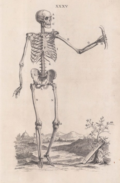 Skeleton: In the stance of the Belvedere Apollo with a quiver of arrows at his feet. The arrows of Apollo brought healing or disease. With key.