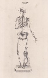 Skeleton: In the stance of the Venus de' Medici with a dolphin at her feet. With key.