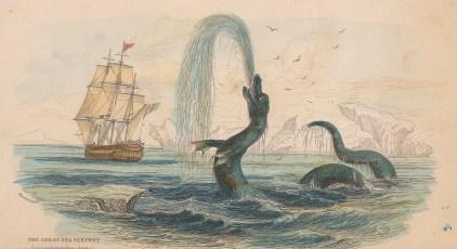 Sea Serpent: Scoliophis Atlanticus from the 1734 eyewitness account of Hans Egede Bishop of Greenland.