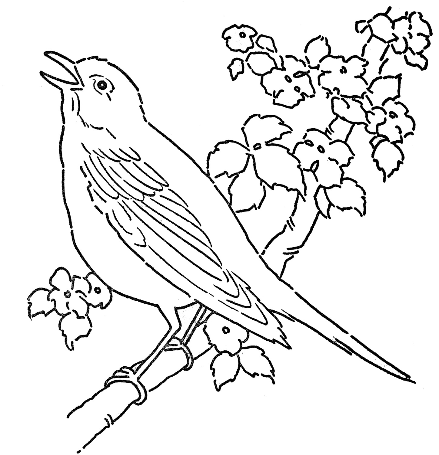 Enchanted Creature Bird 20 Bird Coloring Pages