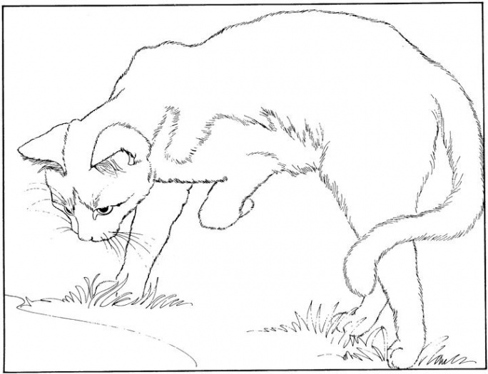 cat coloring pages aubrey