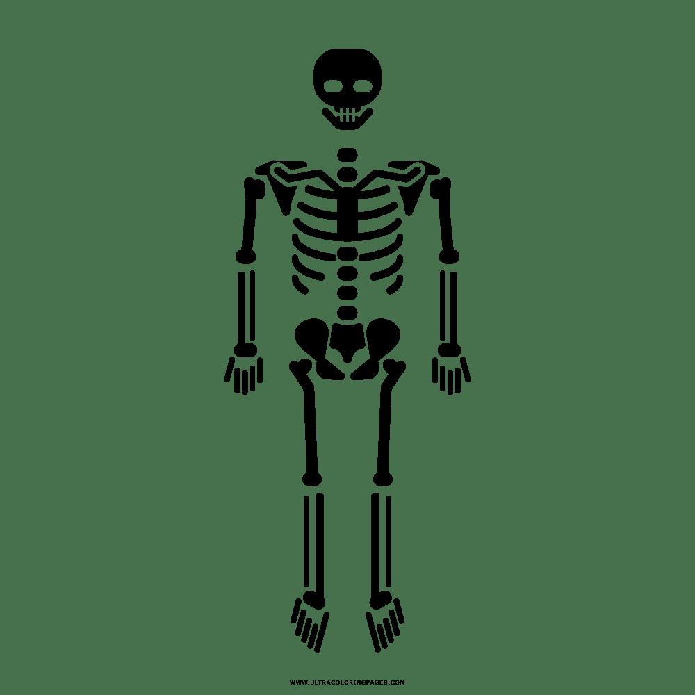 Skelett Malvorlage