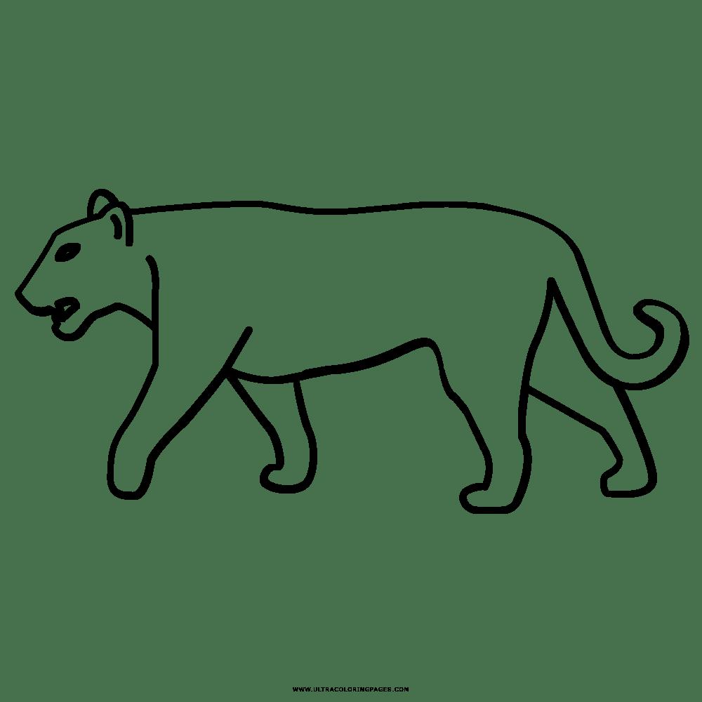 Ausmalbilder Tiere Puma - tiffanylovesbooks