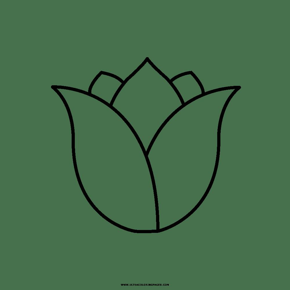 Tulipano Disegni Da Colorare - Ultra Coloring Pages
