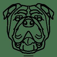 Ausmalbilder Englische Bulldogge   Kinder Ausmalbilder