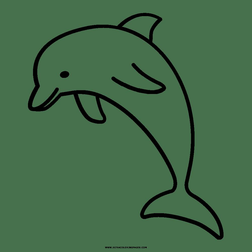 Ausmalbilder Delphin - Calendar June