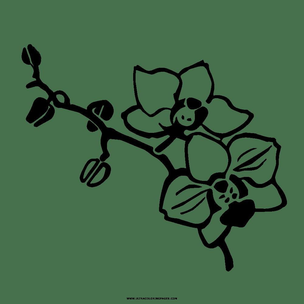 Dibujo De Orquídea Para Colorear - Ultra Coloring Pages
