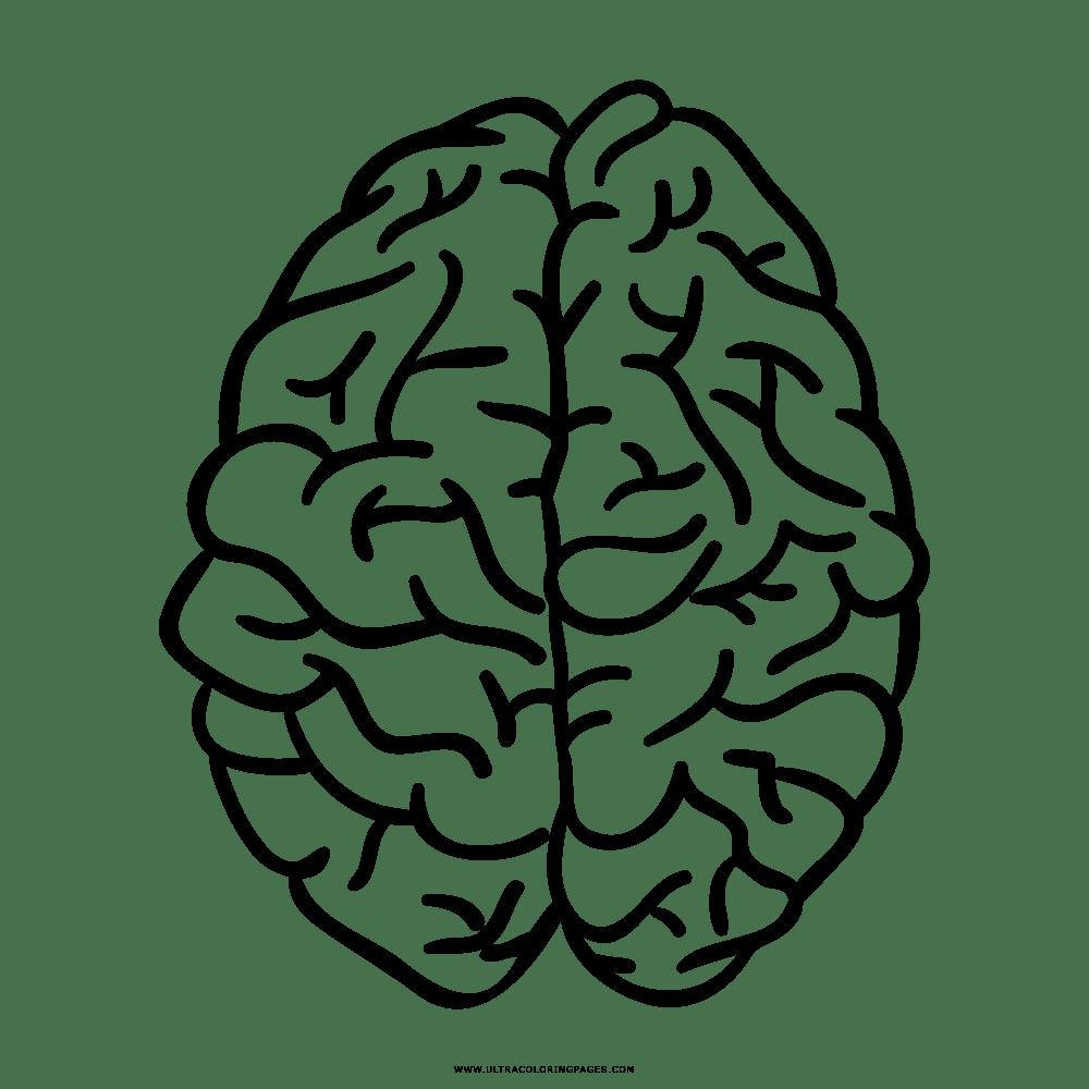 Imagenes De Un Cerebro Para Colorear