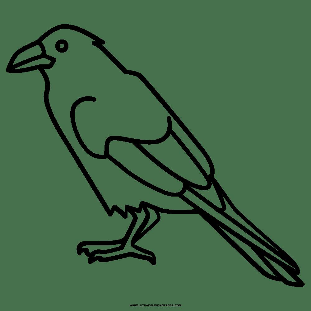 Dorable Cuervo Para Colorear Fotos