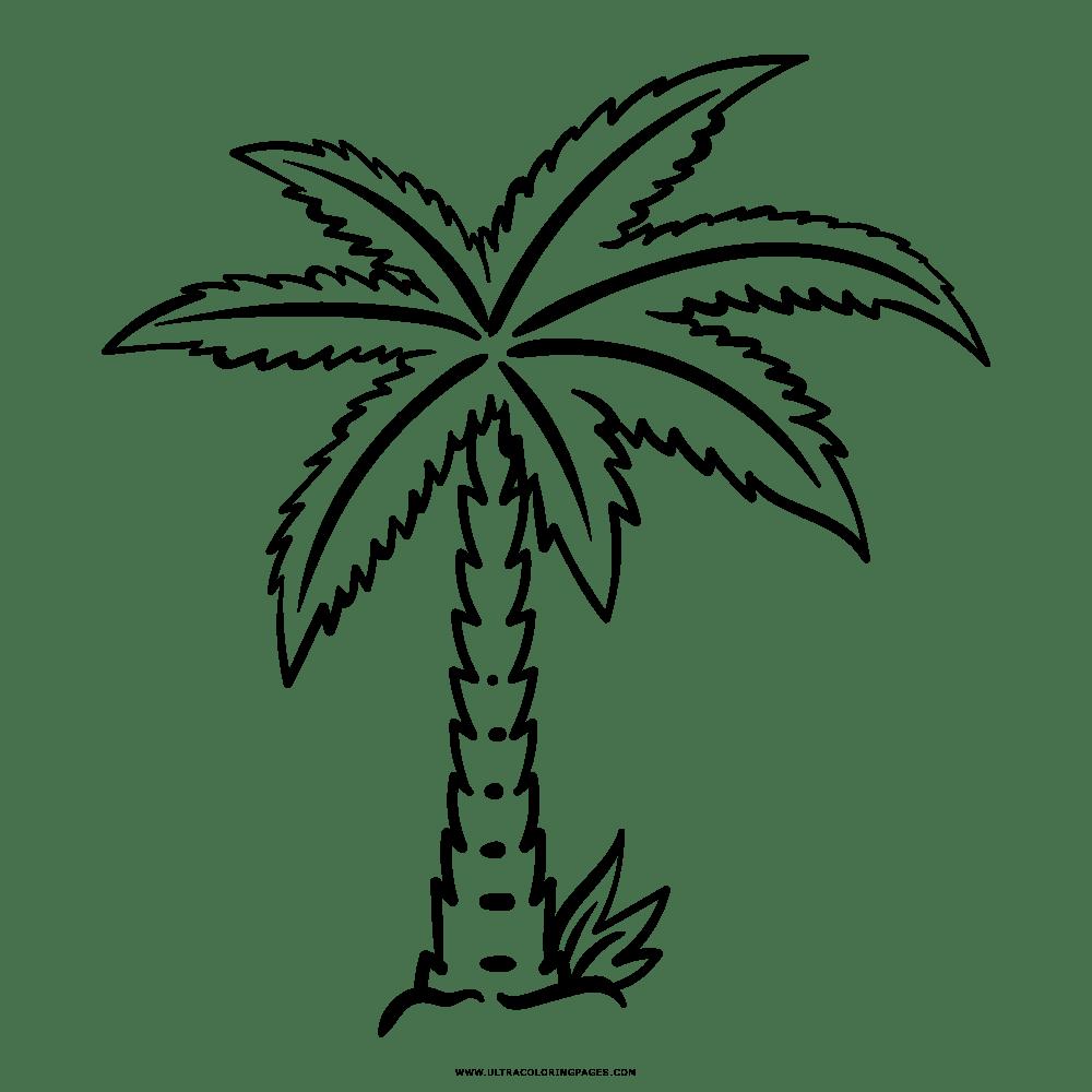 Imagenes De Palmas Para Colorear Sketch Coloring Page