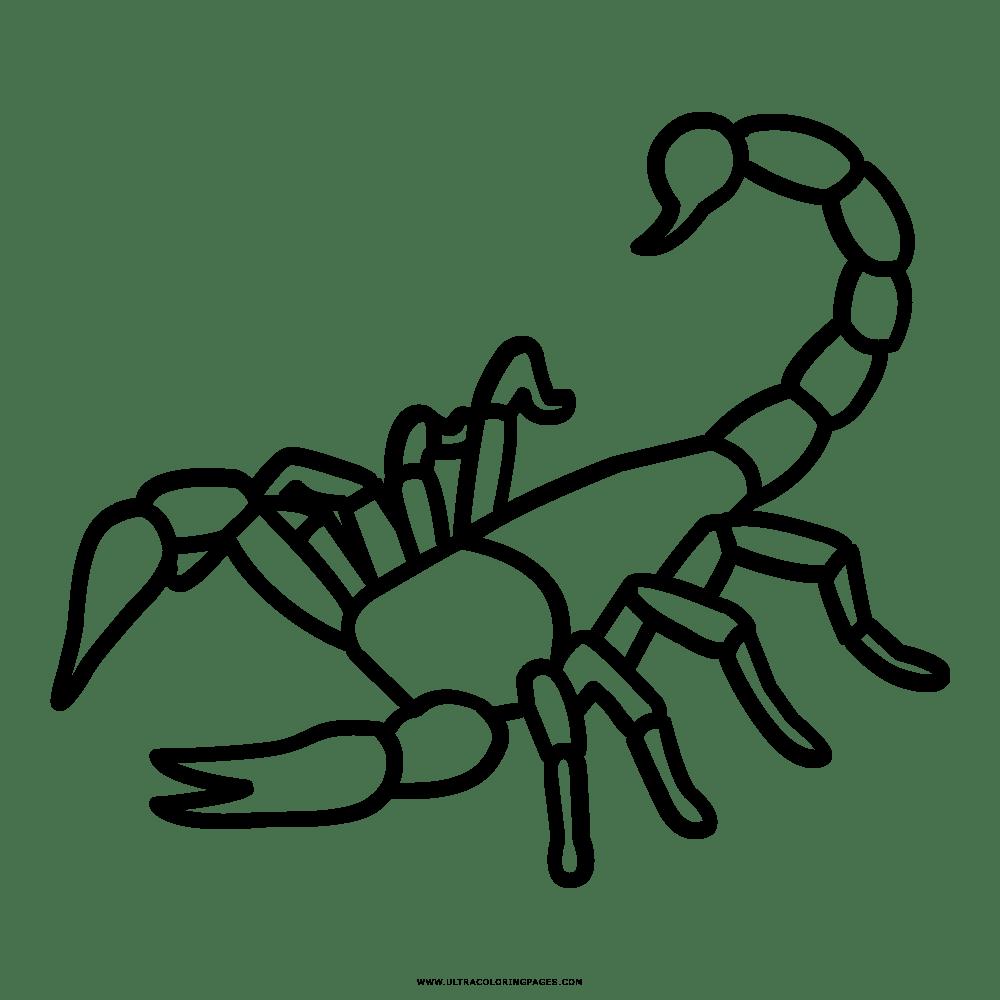 Dibujos De Escorpiones Para Colorear