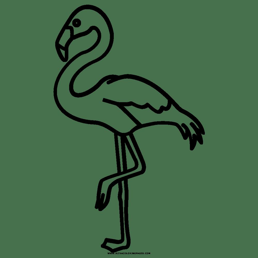 Top 20 Flamingo Ausmalbilder - Beste Wohnkultur