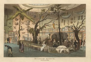"John Papworth, 'Bullock's Museum', 1816. An original colour aquatint. 6"" x 8"". £POA."