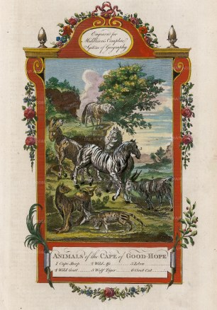 Middleton: Wild African Animals. 1778. A hand-coloured original copper-engraving. 7 x 12 inches. [AFRp1377]